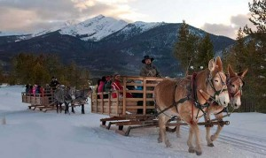 wintersleigh1